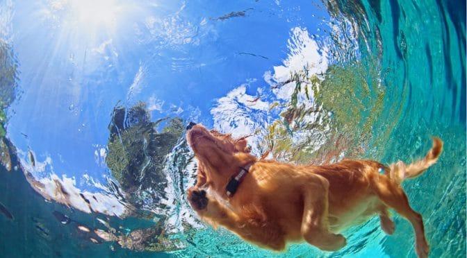 צימרים בצפון עם כלבים – עם החבר על 4