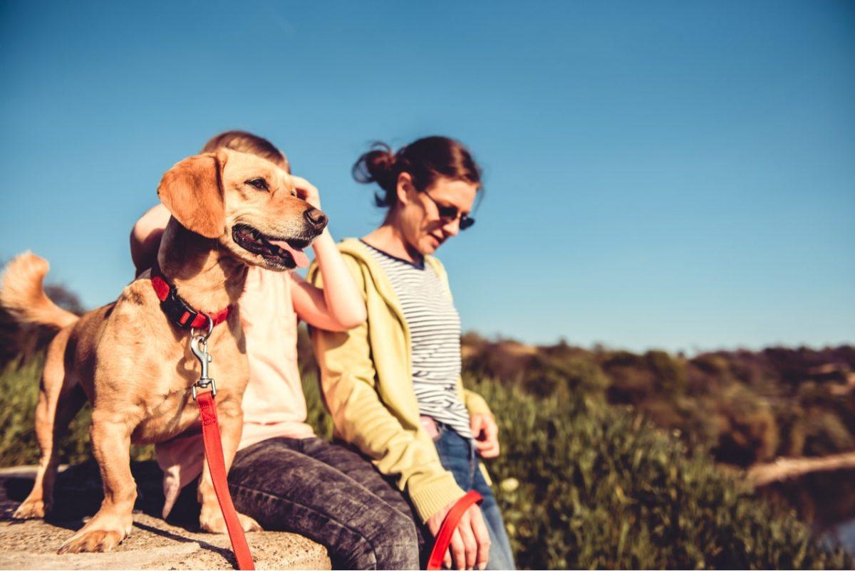 צימרים עם כלבים בצפון בצפון הארץ במתחמי צימרים המקבלים כלבים בתאום מראש.